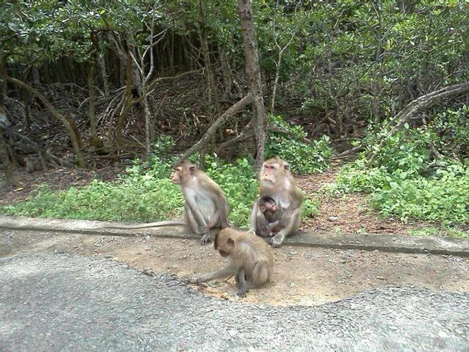 Monkey Island (Can Gio) in Ho Chi Minh - Attraction in Ho Chi Minh, Vietnam - Justgola